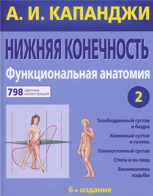 анатомия и физиология. суставы
